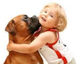 Cuidados básicos del perro