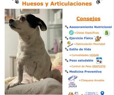 El Cuidado de TU Mascota: Huesos y Articulaciones: Consejos