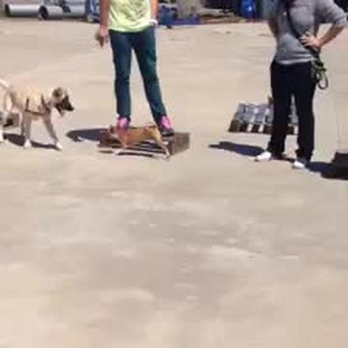 Adiestramiento canino en Zaragoza: Cinópolis