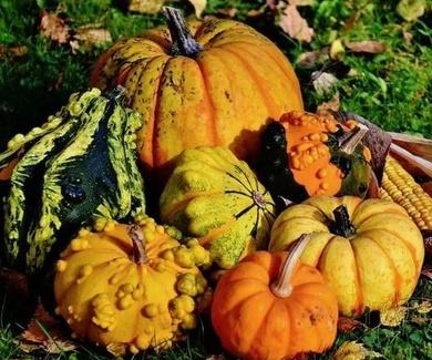 Calabaza: propiedades, beneficios y valor nutricional