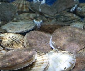 Restaurante con marisco de calidad en A Coruña