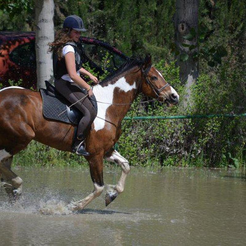 pupilaje de caballos en sesion