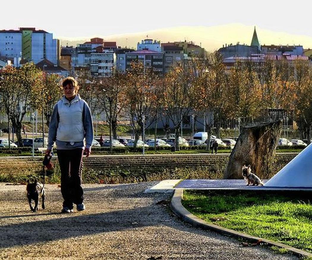 La importancia del paseo diario con tu perro
