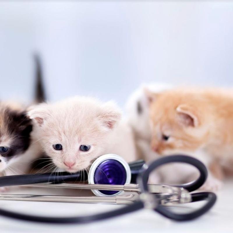 Consultas generales: Servicios especializados de Arca Veterinaria