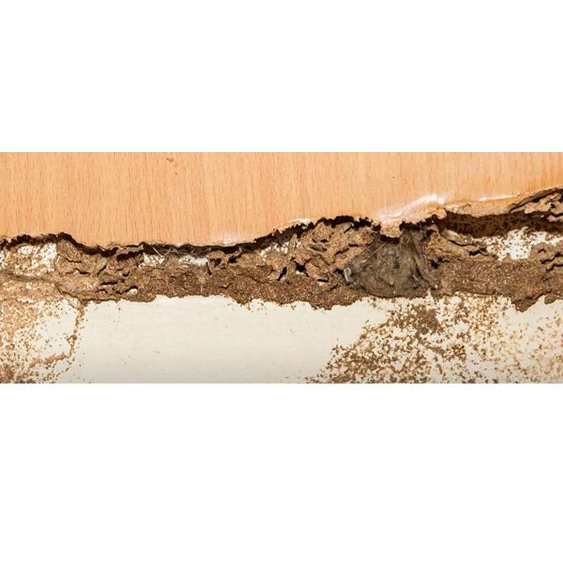 Tratamiento de la madera: Servicios de Aplicaciones FumiServ