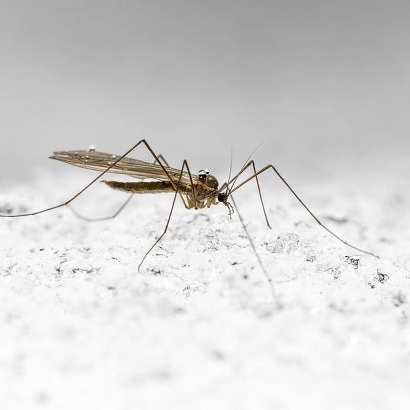 Moscas y mosquitos: Servicios de Dys - Hy