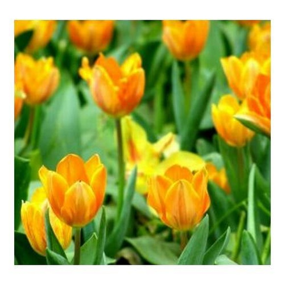 Suministros: Mantenimiento de Jardines de Jardinería Suso