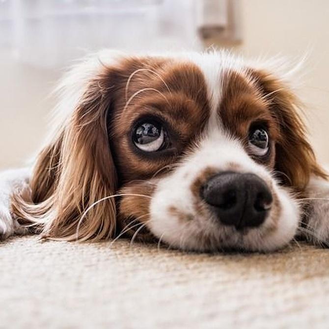¿Cómo tiene que alimentarse tu cachorro?