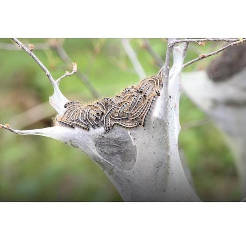 Tratamientos terapéuticos para árboles: Servicios de Aplicaciones FumiServ