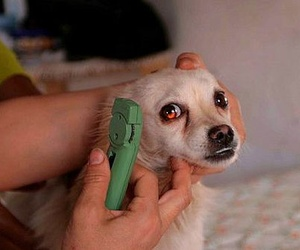 Clínica veterinaria en Collado Villalba