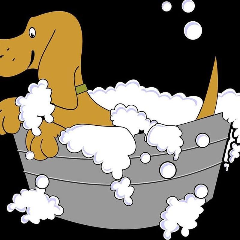 Baños: servicios de Itacan Peluquería Canina