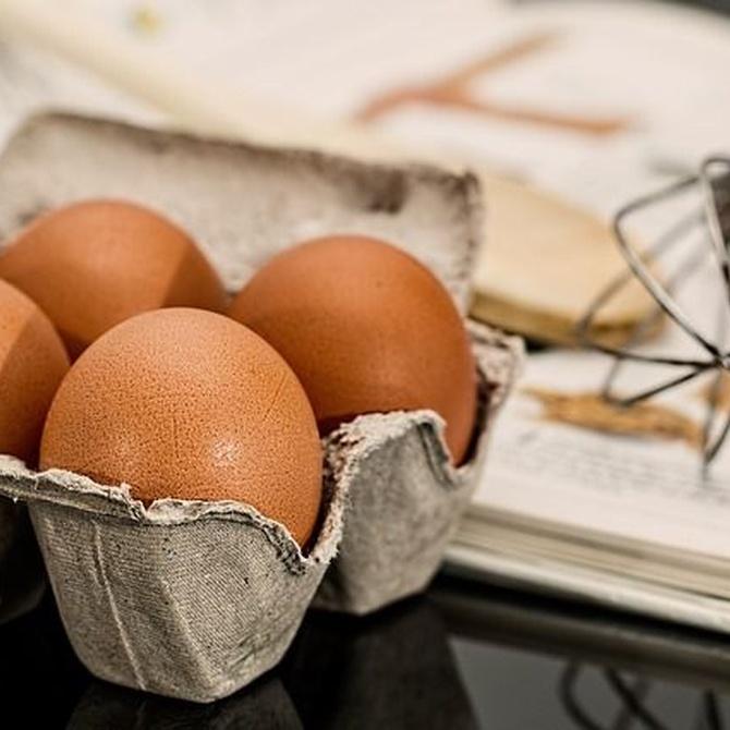 Huevo en polvo, usos y propiedades principales