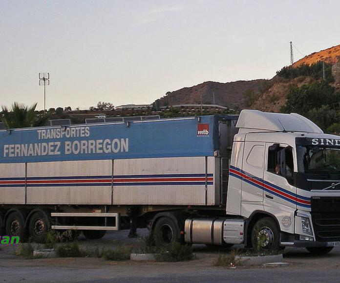 Camiones con motores ecológicos: Servicios de Transportes Fernández Borregón, S.A.