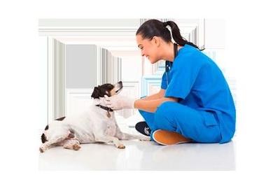 Tu clinica veterinaria en el Clot
