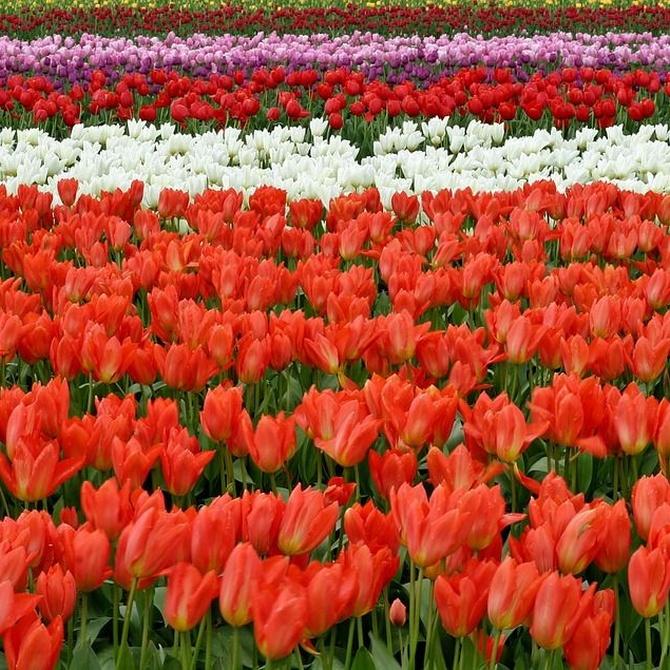 6 momentos especiales para celebrar con flores