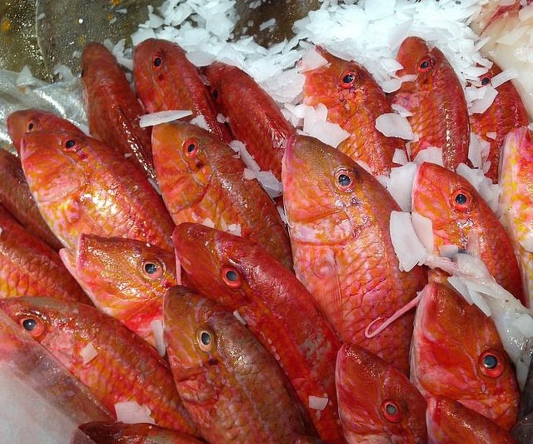 Pescados típicos de Ibiza