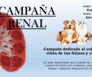 Cuida el riñón de tu mascota