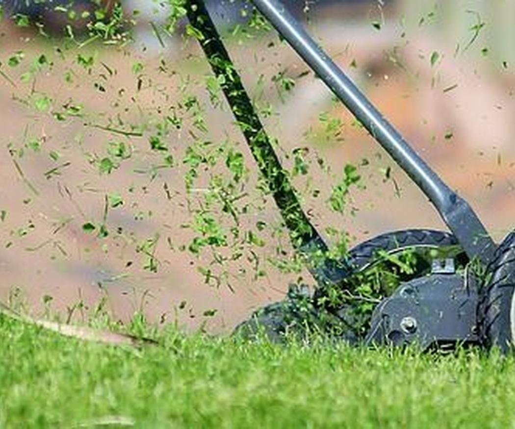 Los mejores abonos y semillas para mantener tu césped