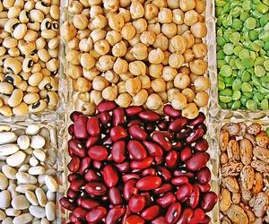 Distribución de legumbres