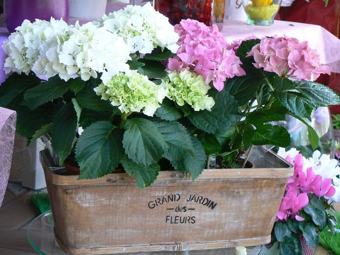 "Hortensias en jardinera ""Grand Jardin"""