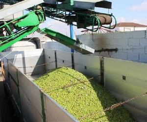 Almacén de compra de aceitunas en España y Portugal