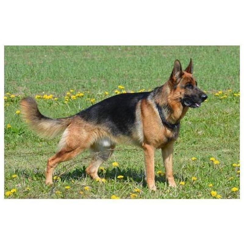 Obtención del permiso de Animales Peligrosos: Servicios de Clínica Serpa Psicotécnico