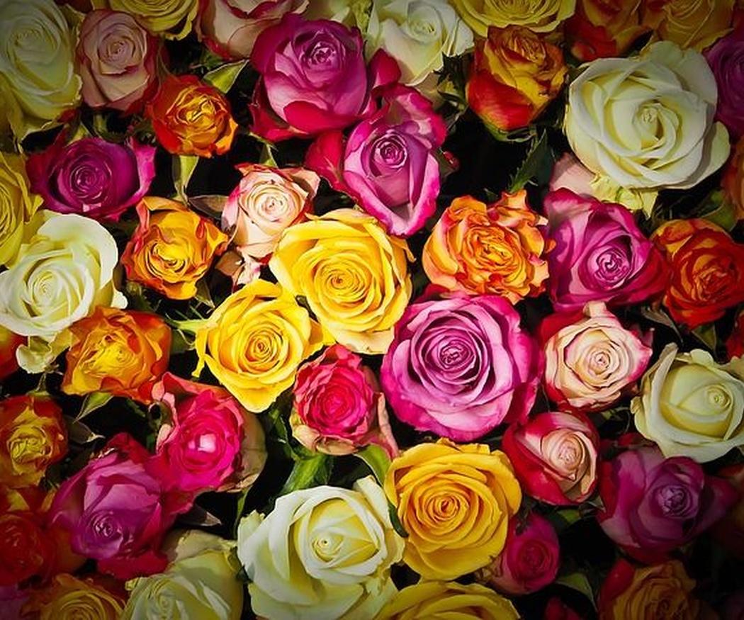 El color de las rosas según su personalidad