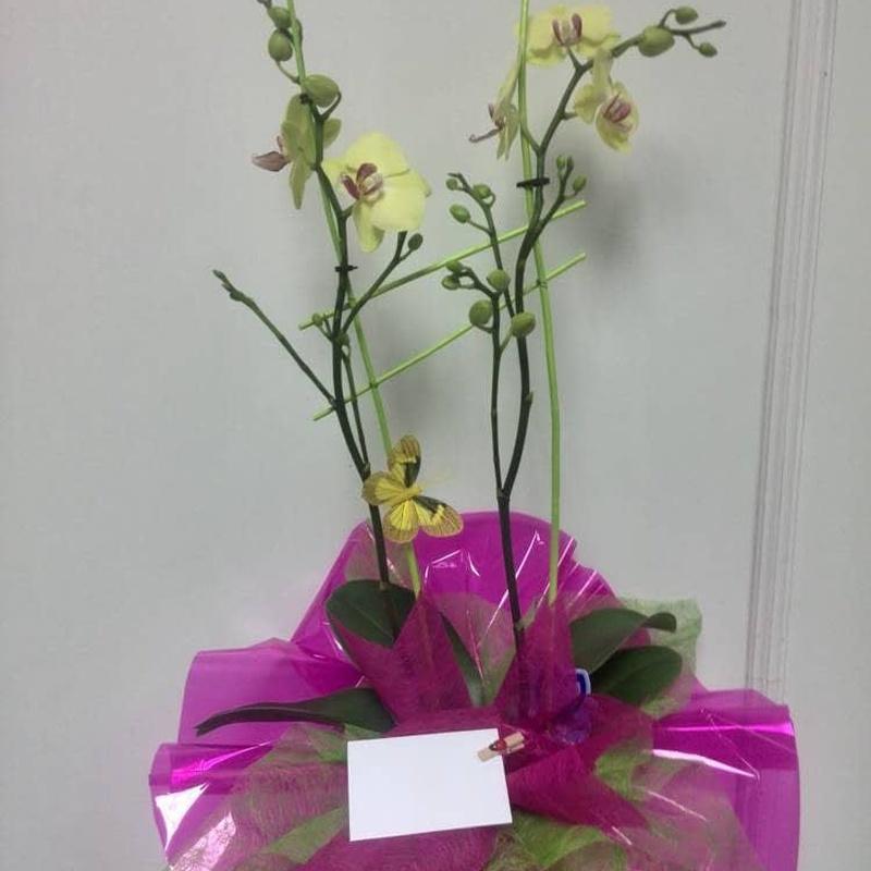 Orquídea preparada con maceta: Catálogo de FLORISTERÍA JOMACOS