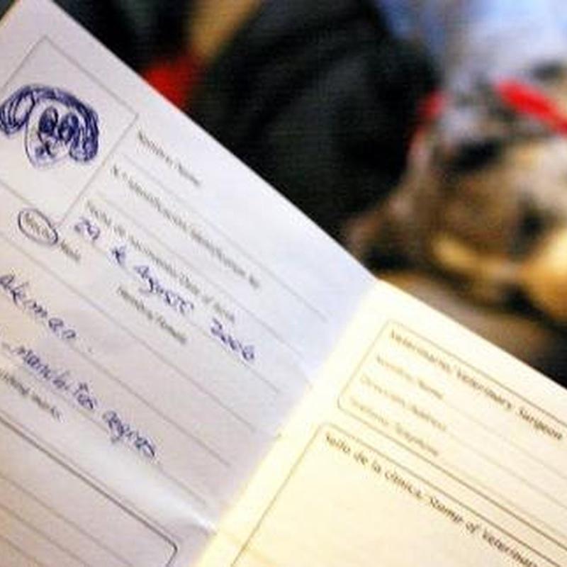 Documentos y certificados: Servicios de Centre Veterinari de la Plana