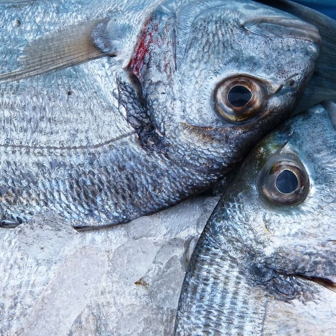 La importancia de consumir pescado