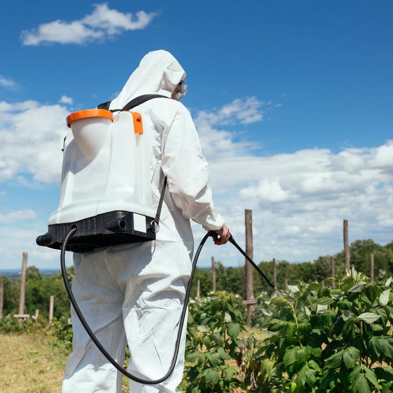 Pest control: Services de Desinfecciones Ibiza