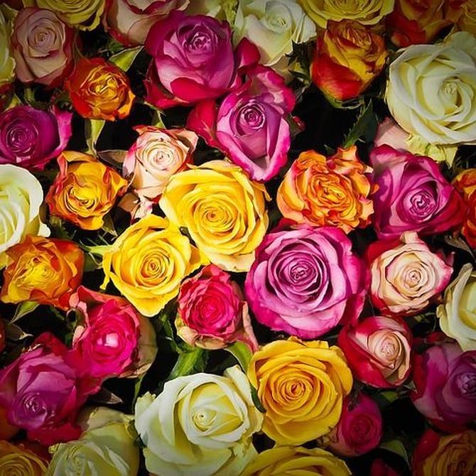 ¿Cuál es el significado de un ramo de rosas?