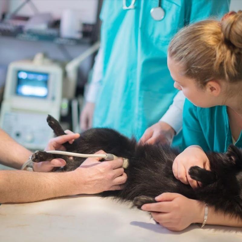 Diagnóstico por imagen: Servicios veterinarios de Clínica Veterinaria Dobermann II