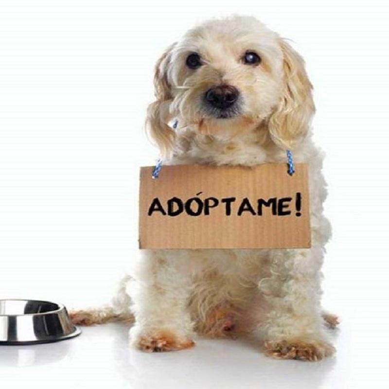 Adopción de perros y gatos: Servicios de Compañeros Tienda De Mascotas