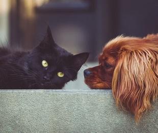 Perros, gatos y alergias