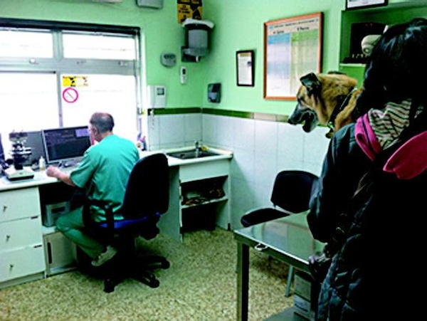 Veterinario 24h  Madrid