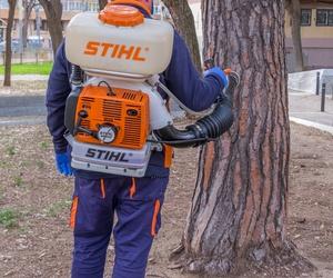 Protección de la madera: termitas, carcomas, hongos...