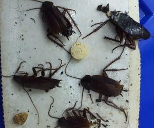 Tratamientos cucarachas