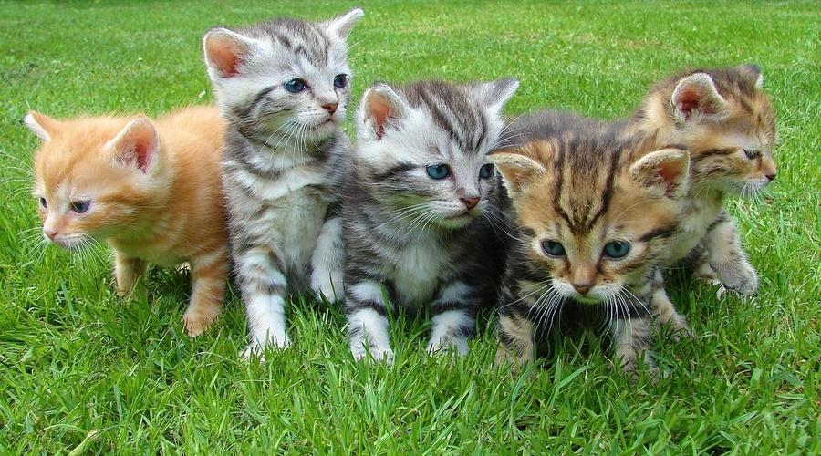 Ventajas de tener un gato como mascota