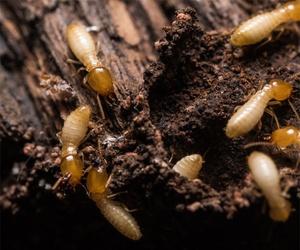 Tratamientos de termitas en Sevilla