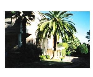 Cepillado de palmeras