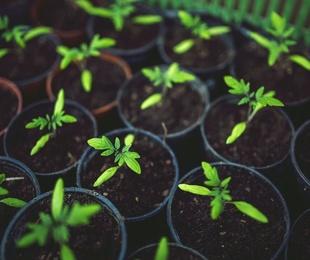 ¿Por qué son buenos los alimentos ecológicos?