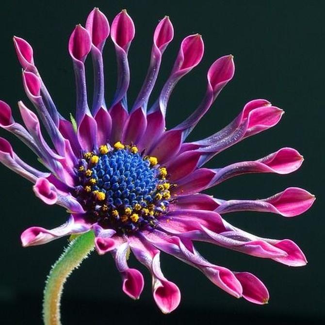 Las flores más curiosas del mundo