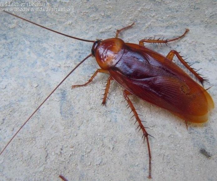 Cucarachas  : Servicios  de Tresdes