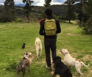 Nuevo servicio de paseo de perros!!!!