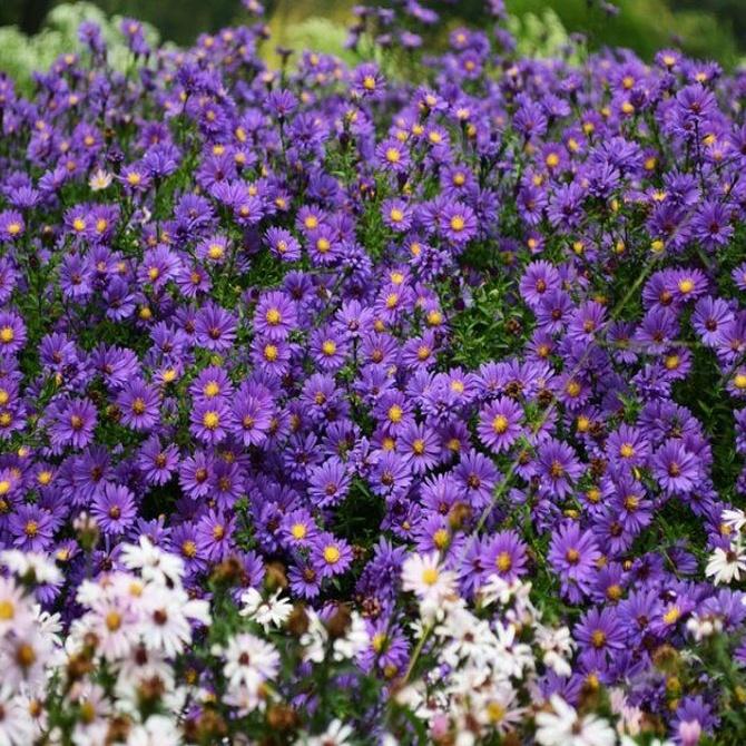 Colorea tu jardín con plantas que florecen todo el año