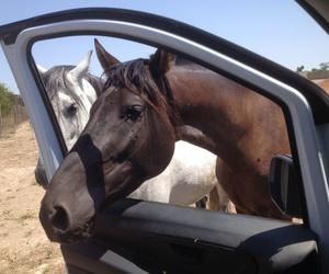 Veterinario para perros, gatos, animales de granja y caballos
