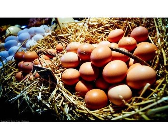 Huevos BIO: Productos de Biorganic Ibiza