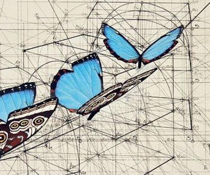 Rafael Araujo.  La geometría de la Naturaleza