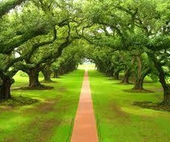 Sanadora espiritual: Servicios de Anna Terapias Naturales